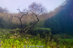 Underwater garden reaching through the surface by Elaine White 